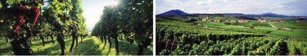 Guided Tour and tasting at a family Grand Cru Domain