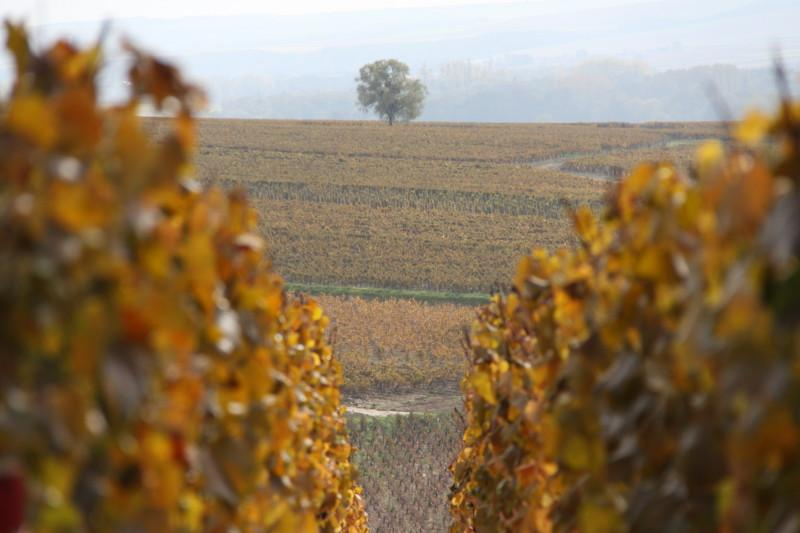 Chablis vineyard, France wine tour