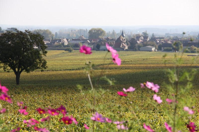 Puligny Montrachet, France Luxury wine tour
