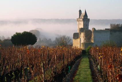 Chinon vineyards, France Luxury wine tour