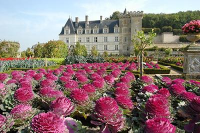 Chateau of Villandry garden - Part of private escorted Loire Valley, Cognac, Bordeaux wine tour GW4