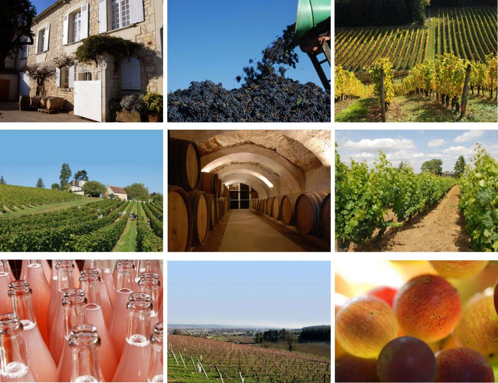 Wine tasting at Domaine de la Noblaie - Loire Valley Tours