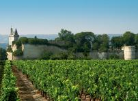 Vineyard in Chinon