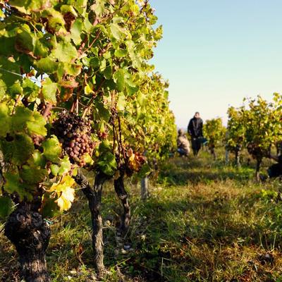 Wine tasting Medoc, dordogne