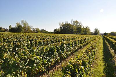 Cheverny wine maker- Part of private escorted Loire Valley, Cognac, Bordeaux wine tour GW4