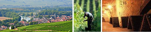 Guided tour and Champagne tasting at a local domain in Damery - Private luxury Champagne tour