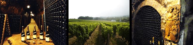 loire valley, grapevine, cave, wine