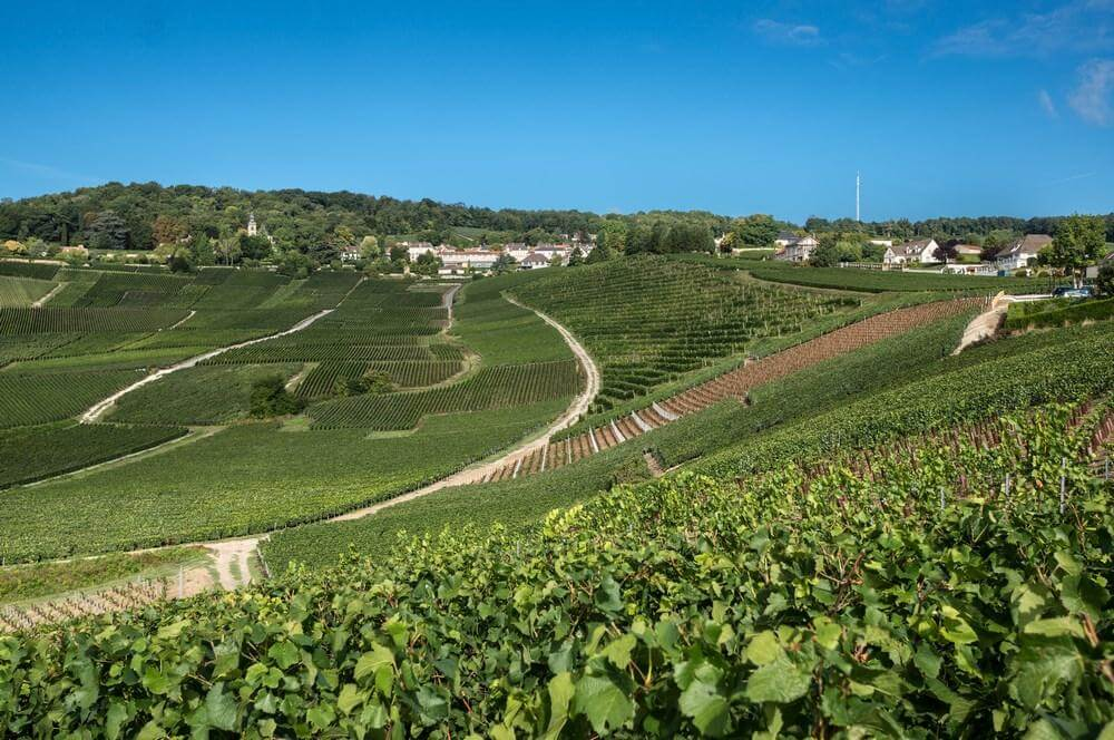 Guided tour of Hautvillers with Dom Perignon's tomb - Private luxury Champagne tour