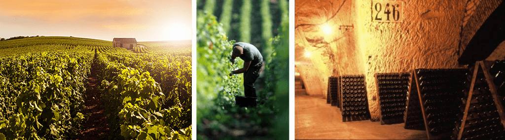 Montagne de Reims vineyards