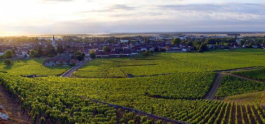 grapevine, burgondy