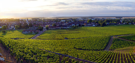 grapevine, burgundy
