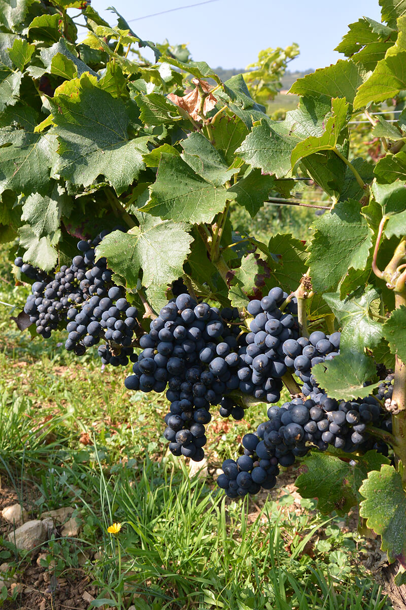 Guided tour and Bourgogne wine tasting - Small group tour in Burgundy