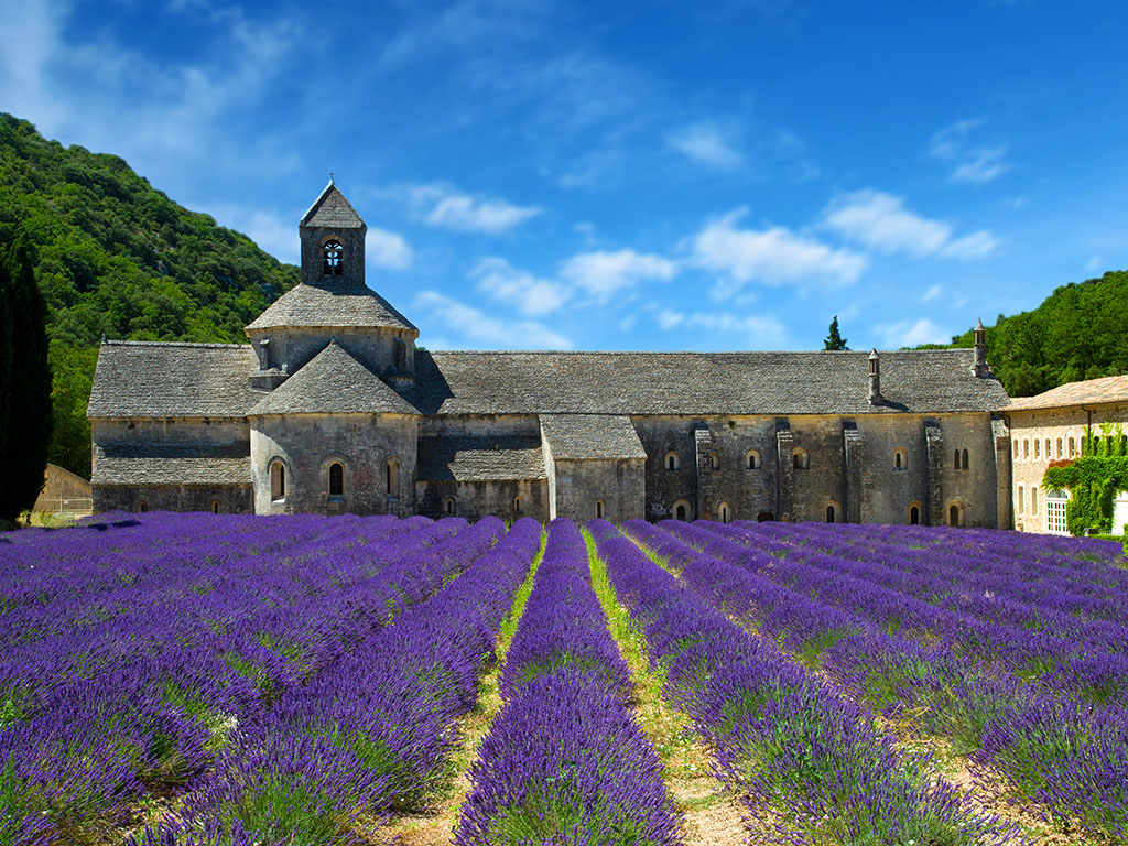Senanque Abbey and Lavender fields - Provence Tours in Luberon - Credit Photo Shutterstock/lsantilli